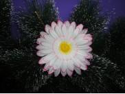 """Цветочная головка """"Гербера бело-розовая""""/ткань/Ø12см (5шт)"""