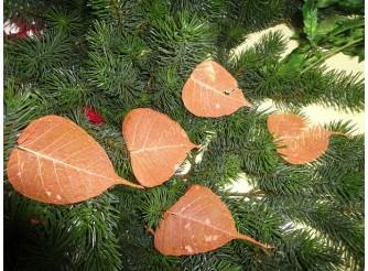 Скелетированный лист оранжевый круглый (5шт)