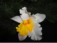 """Цветочная головка """"Орхидея"""" желтая серединка Ø15.5см (1шт)"""