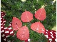 Скелетированный лист красный круглый (5шт)